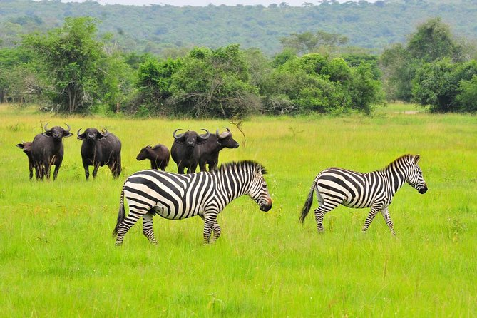 One Day Trip To Lake Mburo National Park