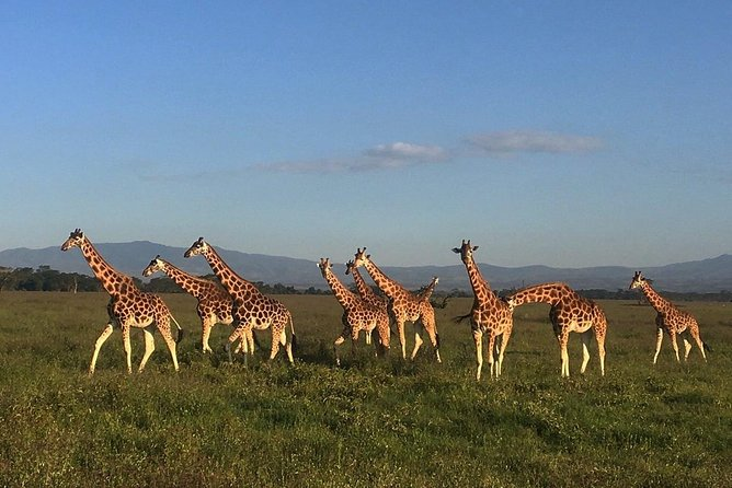12 days Kenya and Tanzania safari luxury private lodge from Nairobi