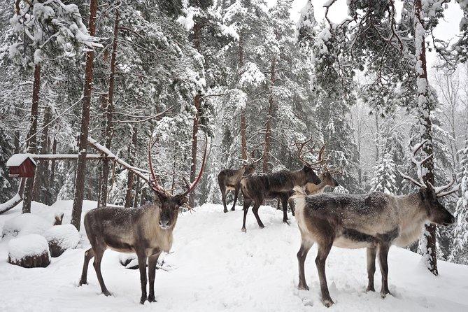 5-hour sightseeing in Helsinki and Nuuksio Reindeer Park