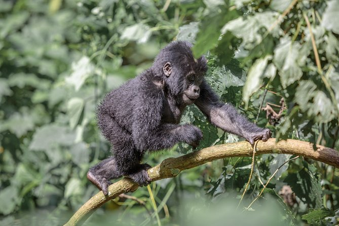 18-Day Mountain Gorilla To The Mara Adventure Camping Tour from Nairobi photo 7