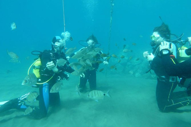 Discover Scuba Diving Course in Taurito