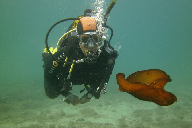 Scuba Diving Beginners 1 dive photo 3