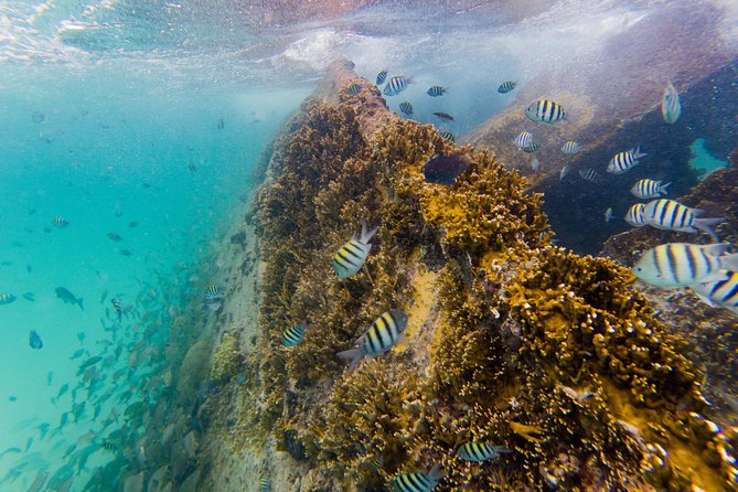 Reef and Shipwreck Snorkeling Tour in Cancun photo 3