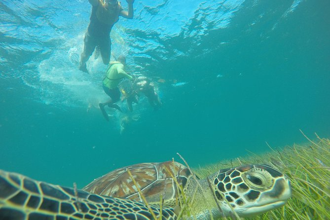 Reef and Shipwreck Snorkeling Tour in Cancun photo 17