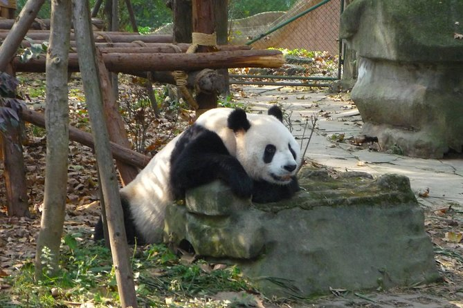 Private Tour: 3-Night Sichuan Explore from Chengdu to Leshan and Mt Emei