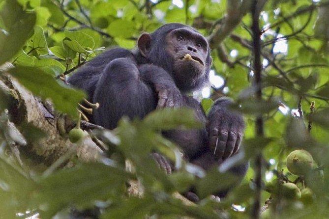 2 Days Nyungwe Forest Safari with Chimpanzee Trekking