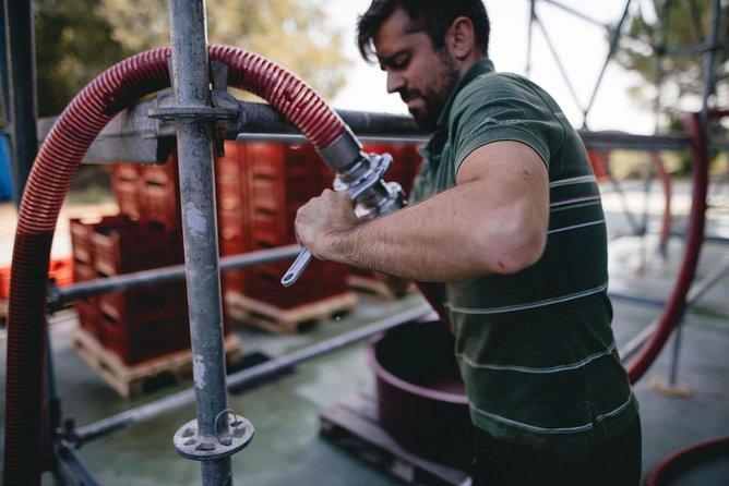 Lake Garda wine tasting: Pinot Noir & tortellini