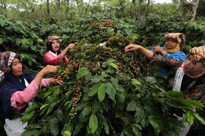 Journey Of coffee Bali