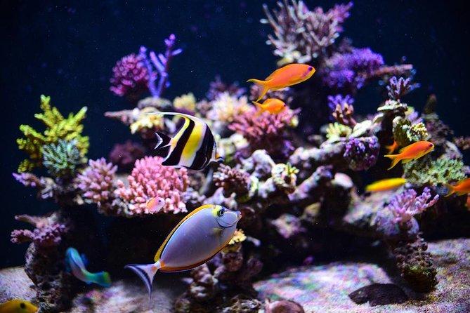Hurghada Grand Aquarium Red Sea in glass