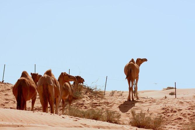 Liwa Oasis Desert Drive from Abu Dhabi