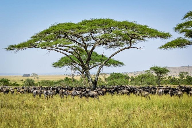 9 Days Follow The Great Migration