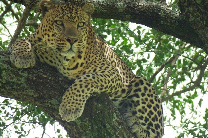 Day trip Lake Nakuru National Park