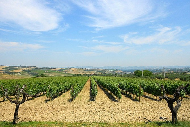 Visit the Marchesi de Cordano winery and taste its wines