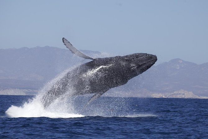 Whale Watching on Catamaran with Food & Drinks Included