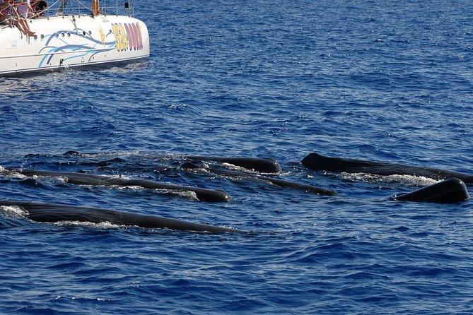 Observação de golfinhos e baleias de catamarã Seaborn
