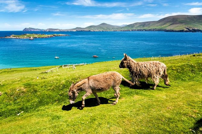 Private tour of Dingle and Slea Head with accredited guide