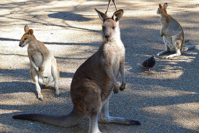 Kangaroos & Koala encounter experience (Half day private tour)