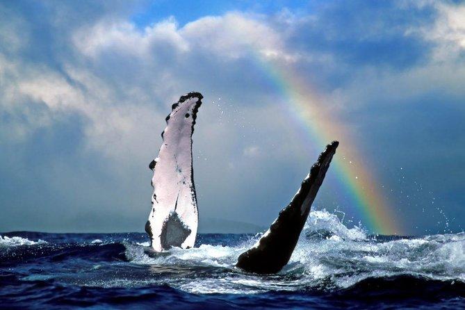 Whale Watch Ocean Exploration