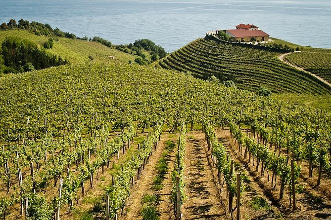 BASQUE CHEESE and TXAKOLI WINE - Private Gastronomic Adventure