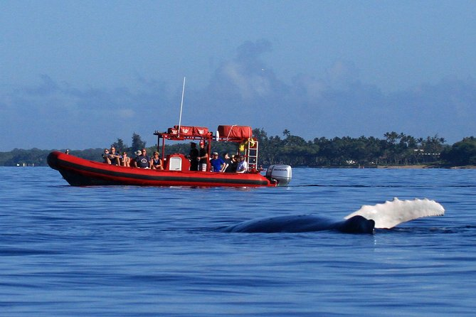 Maui Whale-Watching Tour by Raft from Kihei