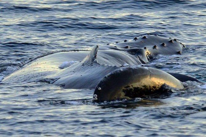 Whale watching-Magic Skjervoy