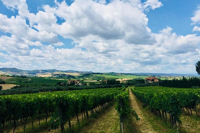 Wine tasting in Val d'Orcia - Private tour from Rome
