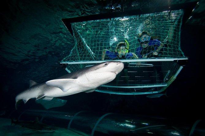 SEA LIFE Kelly Tarlton's Aquarium Shark Cage Experience