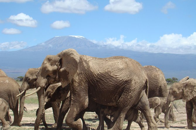 Covid-19 Safe Day tour to Amboseli national park