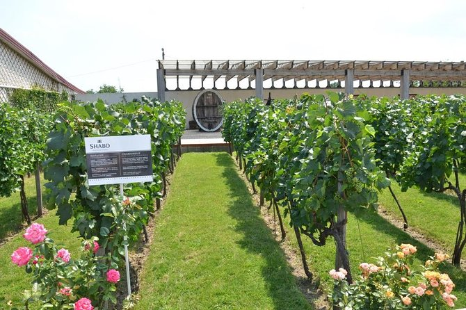 Full-Day Combo Tour from Odessa: Akkerman Fortress and Shabo Wine Center with Tasting photo 1