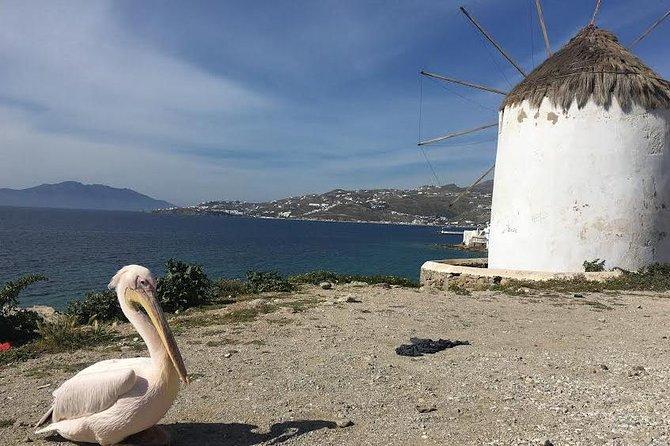 Private Tour: Mykonos Island in Half a Day