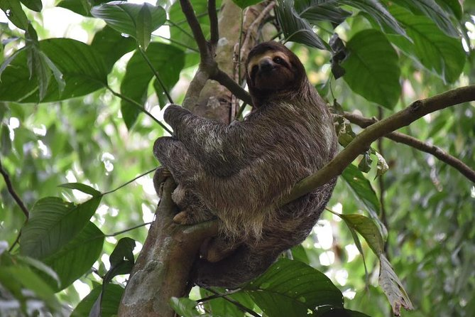 Sloth and Rainforest Adventure with Lunch