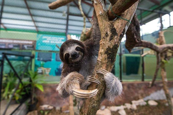Formule combinée pour la forêt équatoriale de Gamboa au départ de Panama