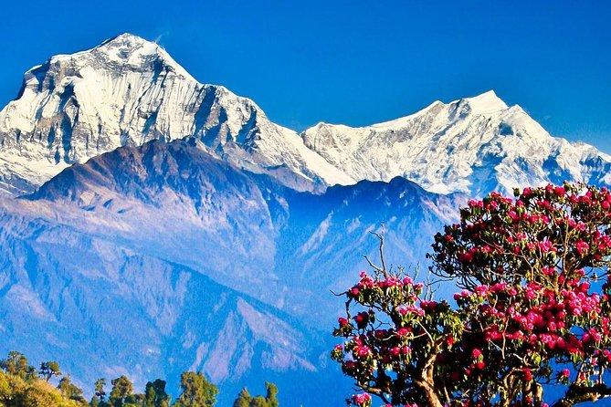 Ghandruk Ghorepani Poonhill Trek
