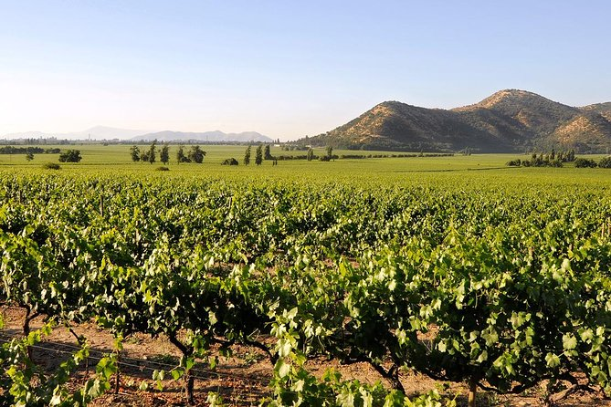 Half Day Trip to Santa Rita Vineyard from Santiago - Wine Tasting Included