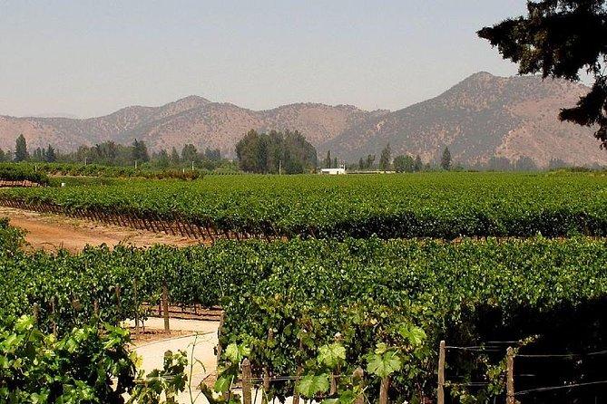 Premium Wine & Cheese Half Day Trip to Concha y Toro Vineyard from Santiago