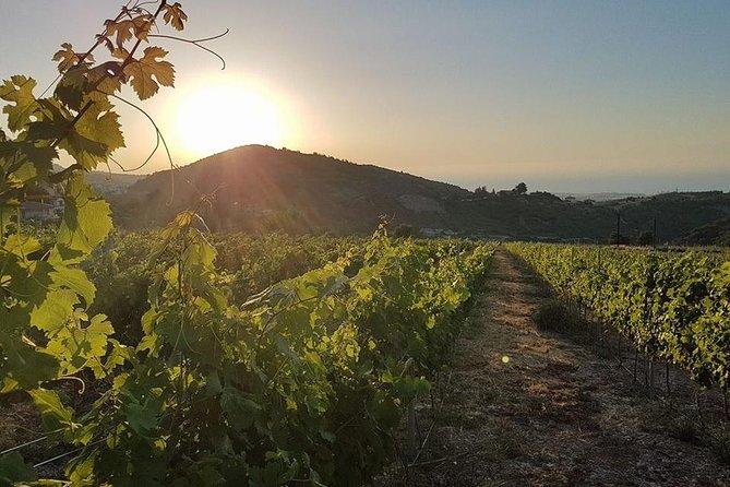 Vineyard & Wine Tasting Tour