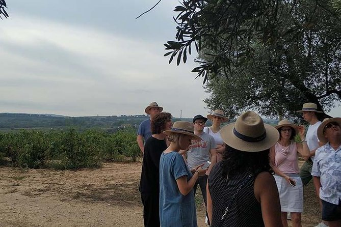 Private Wine & Cava Tour In Penedés