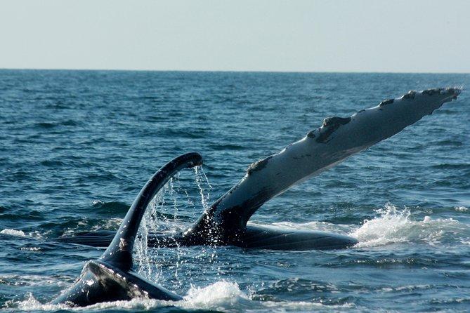 Whale Watching Cruise in Puerto Vallarta