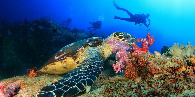 Turtle on Aliwal Shoal