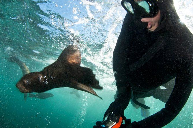 Seal Snorkeling with Animal Ocean in Hout Bay