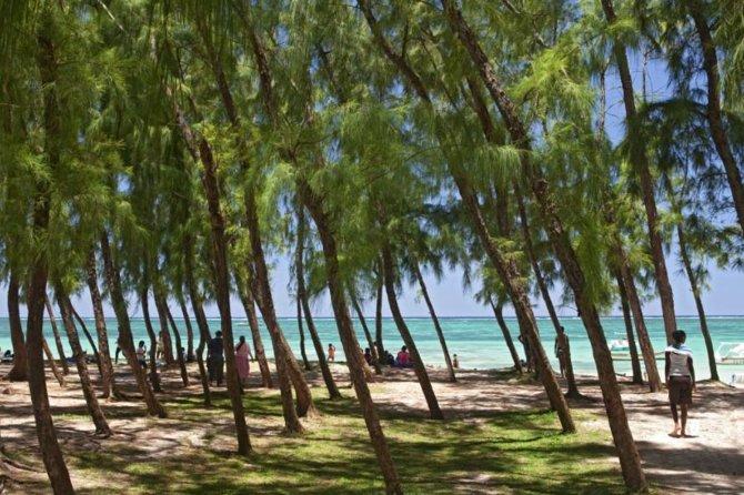 The Beach for our Half Da