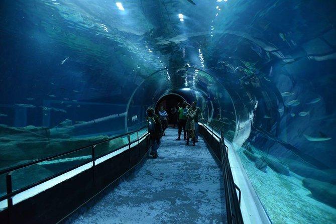 Aquario With Olympic Boulevard Rio de Janeiro