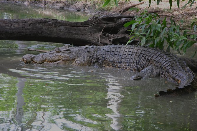 Goa Crocodiles & Spice plantation tour