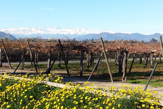 Unique Wines In Colchagua Valley