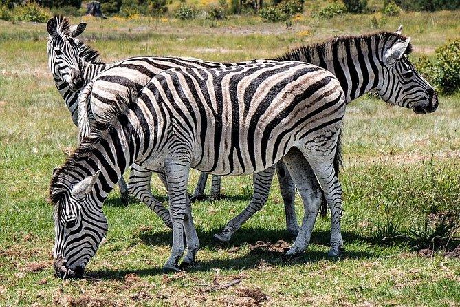 8 Days Camping Safari : Tarangire to Lake Manyara to Serengeti to Ngorongoro