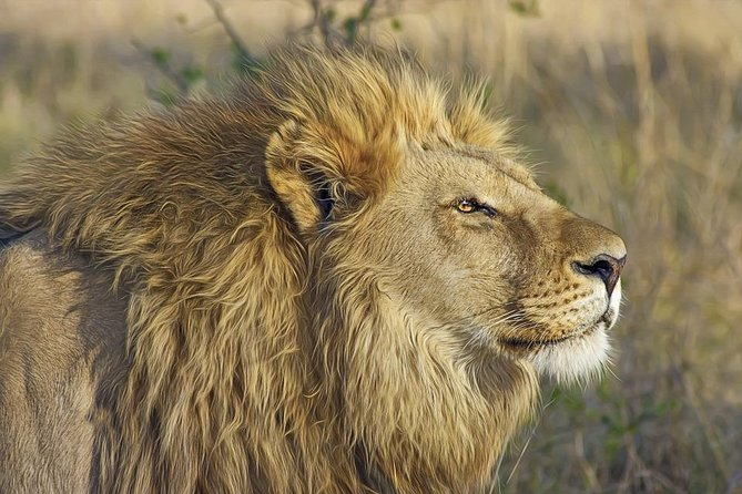 6-Days : Lake Manyara to Serengeti Plain to Ngorongoro Crater