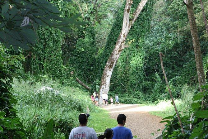 Manoa Waterfall Adventure