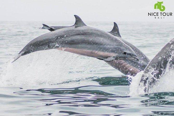 Sunrise Dolphin Wacthing & Menjangan Island Snorkeling Day Trip