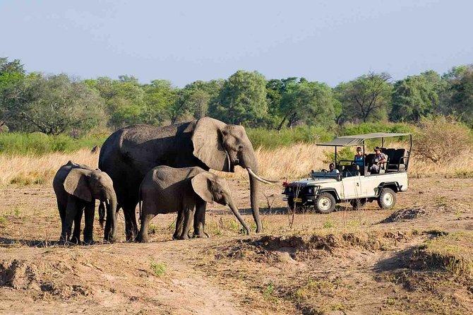 Zambezi National Park AM or PM Game Drive