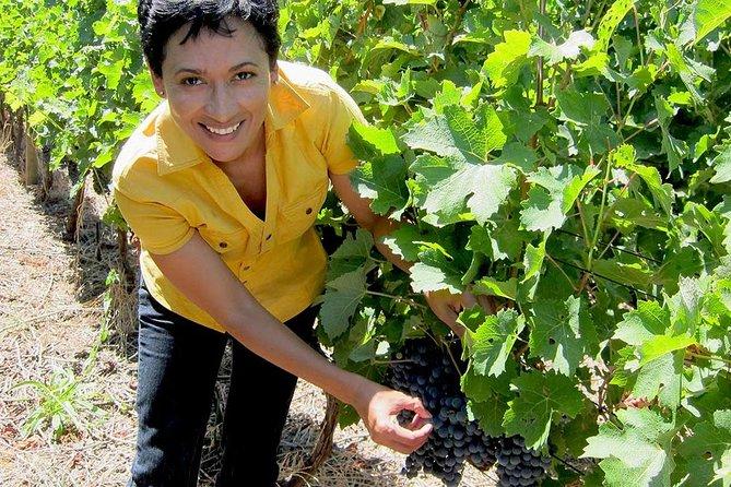 Wonderful Wine Tour in Chianti (Tuscany) - Siena, San Gimignano and Chianti Wine